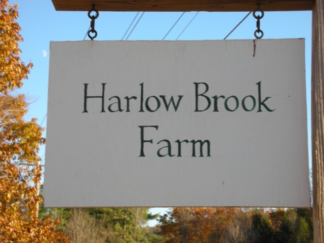 harlow brook